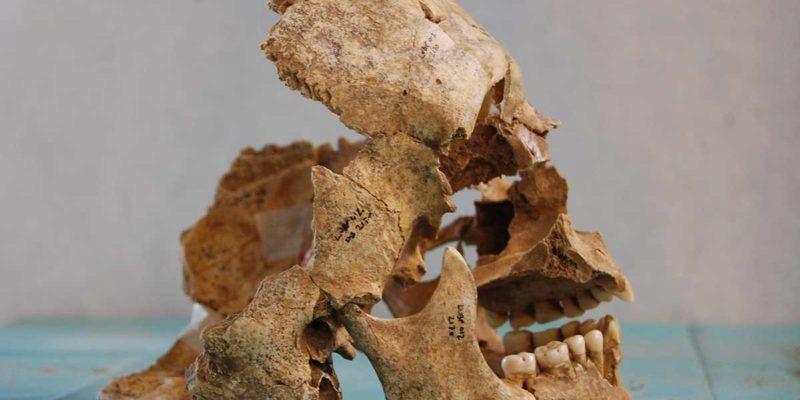 A cranium from Area 2000
